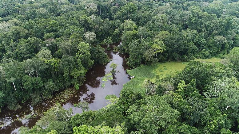 Conferencia: «Los ríos como responsables primarios de la biodiversidad amazónica», por el Dr. Jorge D. Abad